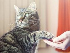 Cat-hand-shake