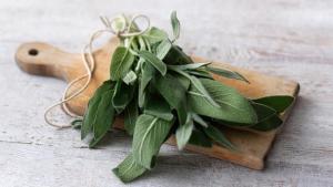Салвия / Градински чай (Sage)
